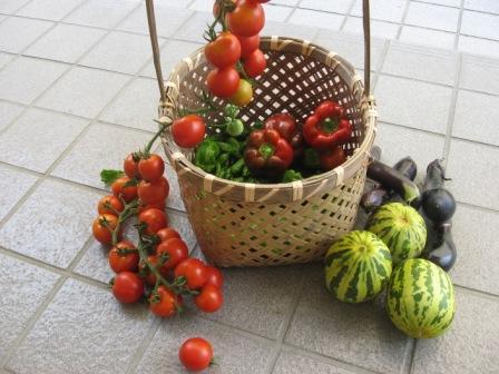 夏野菜.JPG